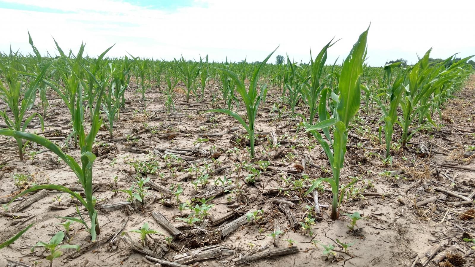 Declararon la emergencia agropecuaria por sequía para 27 municipios