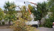 Edén corta ramas cercanas a los cables de media tensión