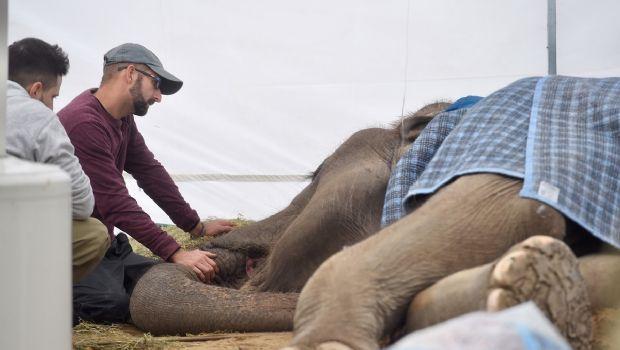 La muerte de la elefanta Pelusa acelera el cierre y la reconversión del zoo de La Plata