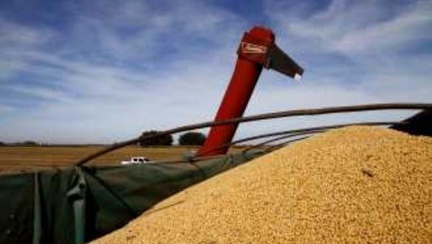 La peor cosecha de soja en una década: por la sequía se perdieron US$ 4.200 millones