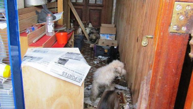 Se incendió una vivienda  con 50 perros en su interior