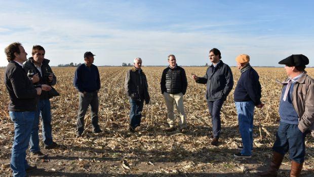 La superficie sembrada de trigo en la provincia de Buenos Aires creció un 18,8%